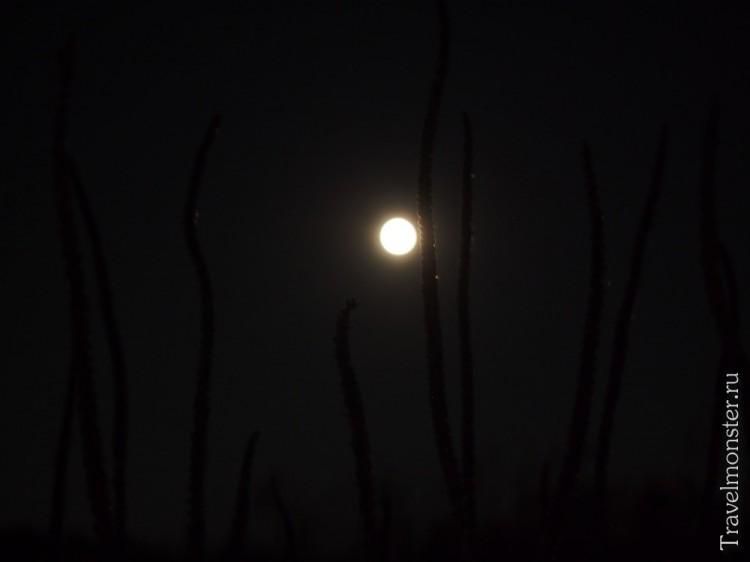 Суперлуние в Рязани 9 сентября. Взгляд из травы.