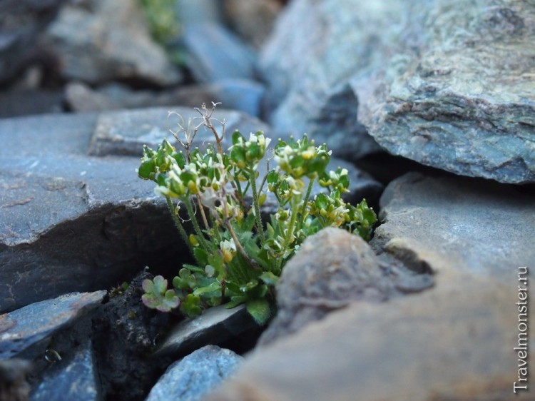 Среди камней в горах пробиваются к жизни зеленые ростки