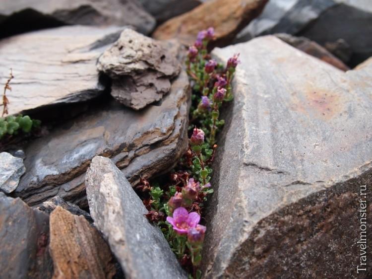 Любая щель между камнями может дать жизнь новым растениям