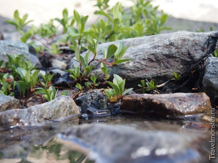 Горный ручей с местной растительностью