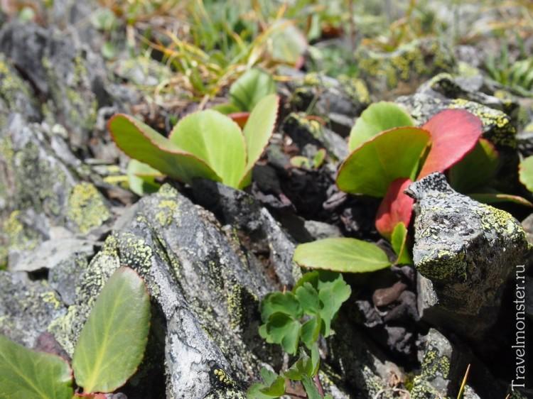 Кажется, что растения тут растут прямо из камней