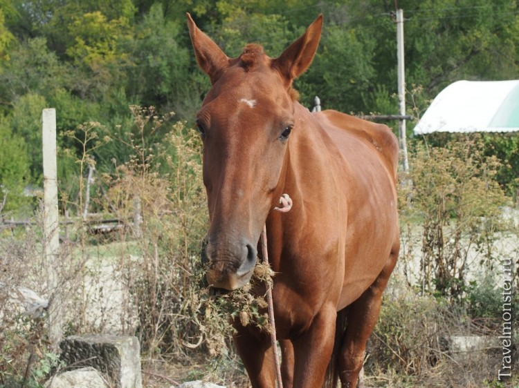 Меланхолично жующей какие-то колючке лошади ни до кого дела нет
