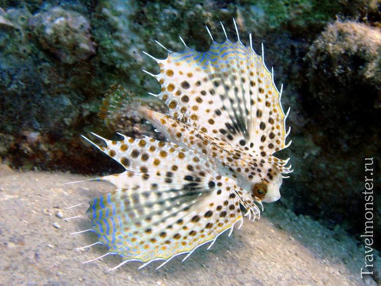 Рыбки на Хон Мун