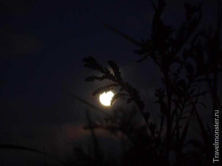 С маленьким штативом снимать луну получается только на фоне растений