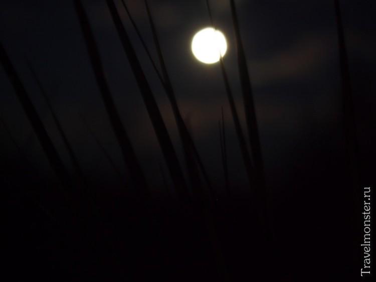 Луна прячется в траве. Ну или я скрываюсь в траве от луны.