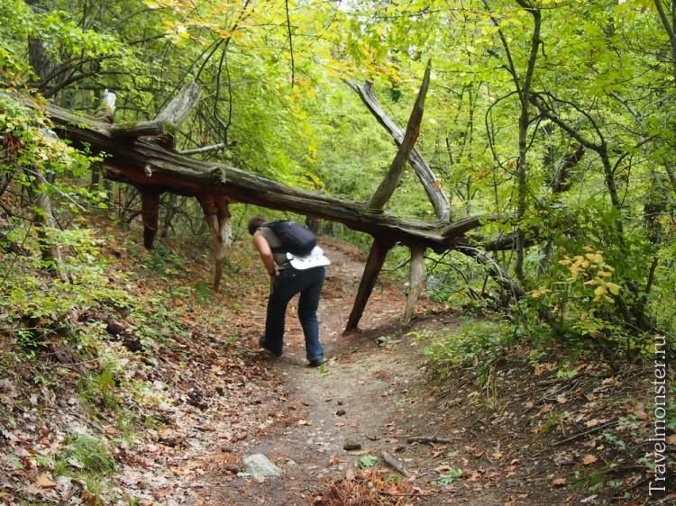 На дороге вниз с Мангупа иногда встречаются препятствия