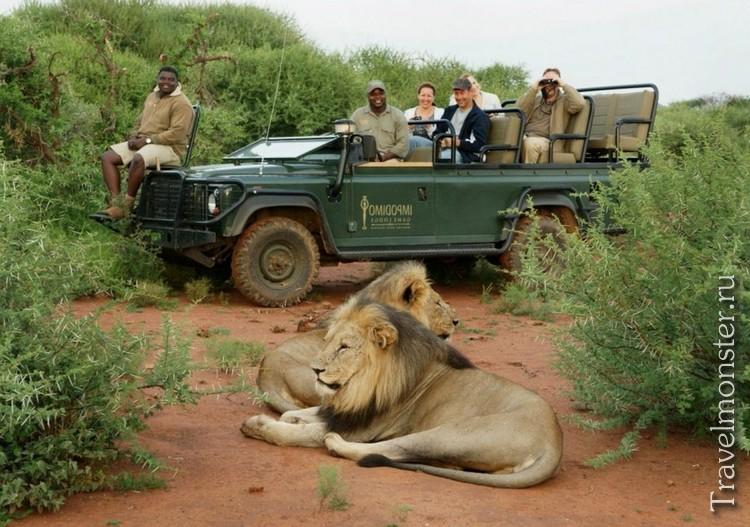 Фотосафари в Африке со львами
