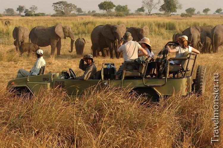 Африканское фотосафари со слонами