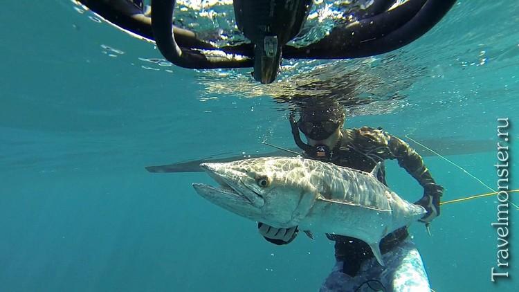 Подводная охота в Тайланде