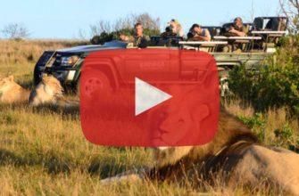 Путешествие по Африке - Видео